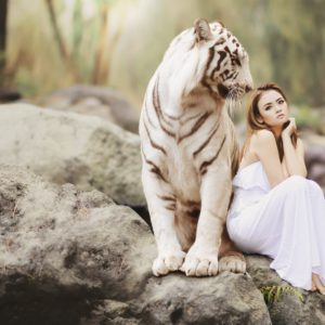 nature-animal-world-white-bengal-tiger-stockpack-pixabay.jpg
